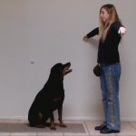 dog obedience training tips