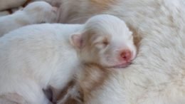 how old are puppies when they open their eyes